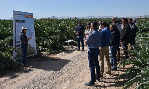 Nunhems impulsa el consumo de alcachofa en España-joseantonioarcos.es