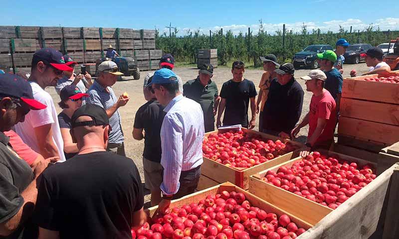 Poma de Girona visita los manzanos de Nueva Zelanda. /joseantonioarcos.es