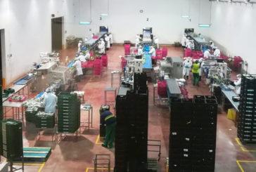 Los exportadores de Murcia crean protocolos frente al coronavirus