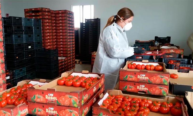 Cooperativas agrícolas adoptan las medidas de los protocolos de seguridad-joseantonioarcos.es