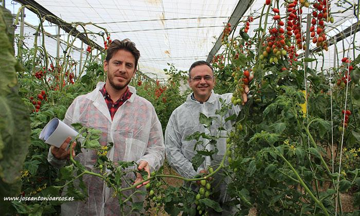 Rubén Vicente y Antonio López de Axia Seeds con la variedad de tomate cherry pera HTL1708480. /joseantonioarcos.es