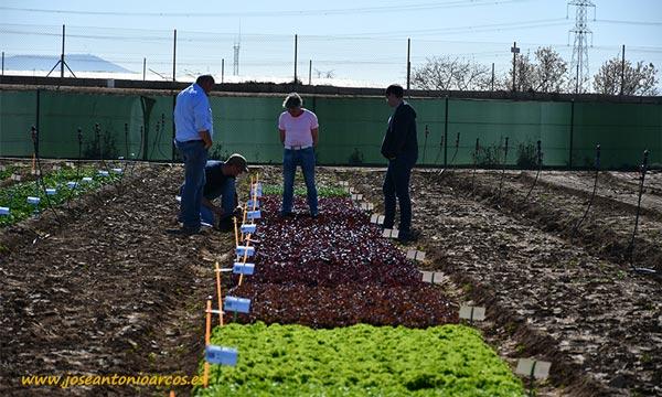 Demo Cultivos de Invierno 2020 Rijk Zwaan. /joseantonioarcos.es