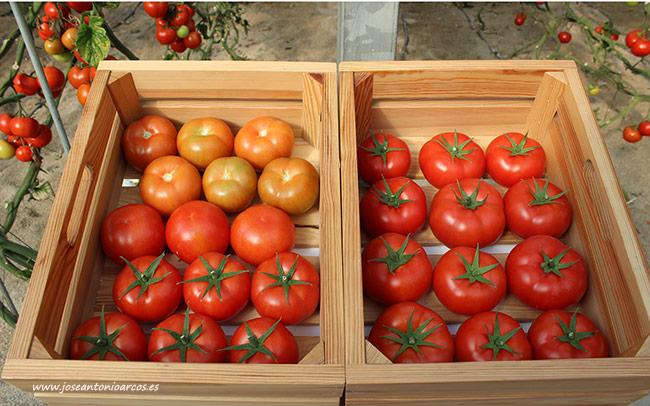 Tomate Rychka. /joseantonioarcos.es