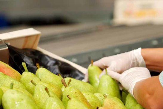 Afrucat hace un pedido a China de EPIS para las cooperativas de fruta