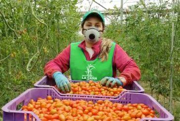 Prevención en empresas de Granada como La Caña