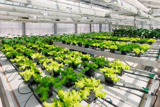 El papel decisivo del calcio en los cultivos