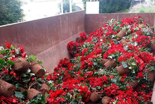 Ornamentales y flores, al contenedor