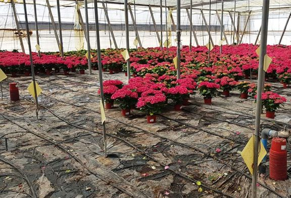 El sector ornamental pide abrir centros de jardinería y floristerías