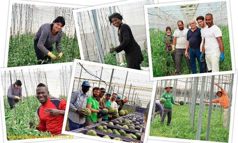 Agricultores y trabajadores inmigrantes en invernaderos de Almería. /joseantonioarcos.es