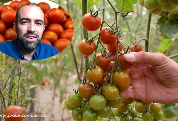Karelya saca al cherry del commodity y le da valor