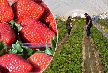 FruitCare investiga alternativas viables a la reducción de materias activas