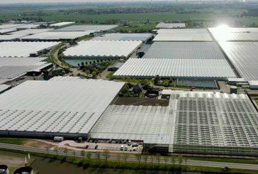 Syngenta abre en Holanda un gran centro de investigación en tomate