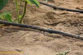 El agricultor que mejor use el agua podrá certificar su huella hídrica