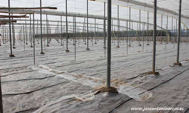 Slick de Ecoculture aumenta en hasta un 30% la eficacia en la desinfección de suelos agrícolas-joseantonioarcos.es