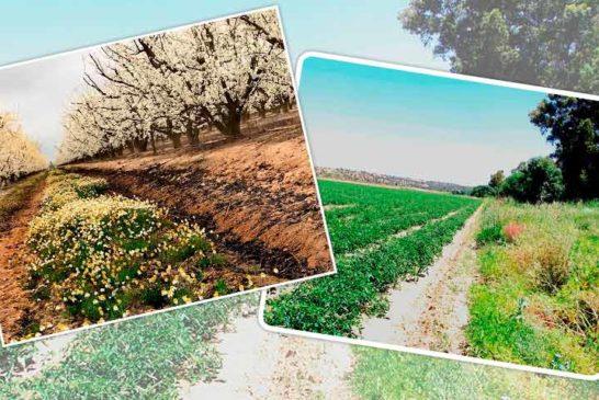 Una agricultura productiva y rentable fomentando la biodiversidad es posible