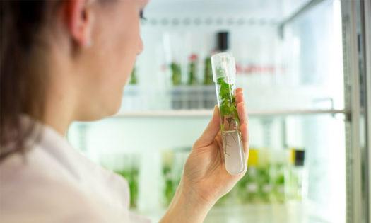 ValGenetics plantea cambios disruptivos en biotecnología vegetal post Covid