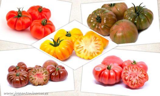 Yuksel Seeds presenta sus especialidades de sabor