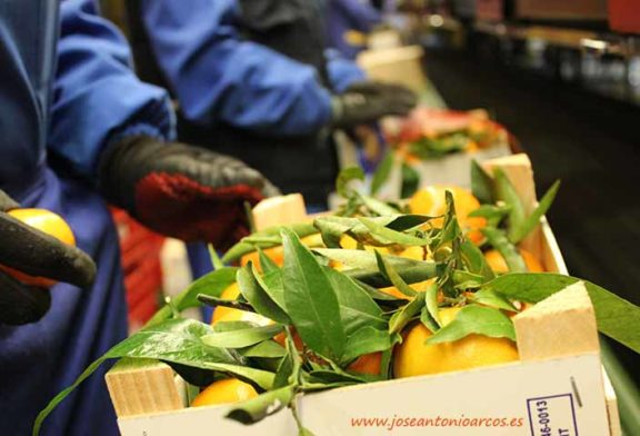 Consumidores españoles y europeos disparan la demanda de cítricos