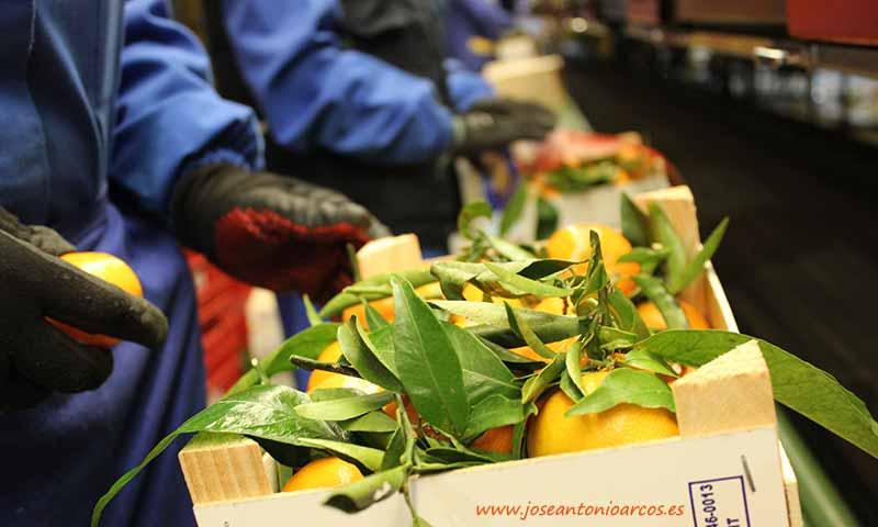 Venta de cítricos. Naranjas y mandarinas /joseantonioarcos.es