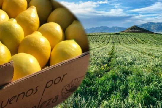 Campojoyma cultiva 160 Has de limón en Níjar y Los Gallardos